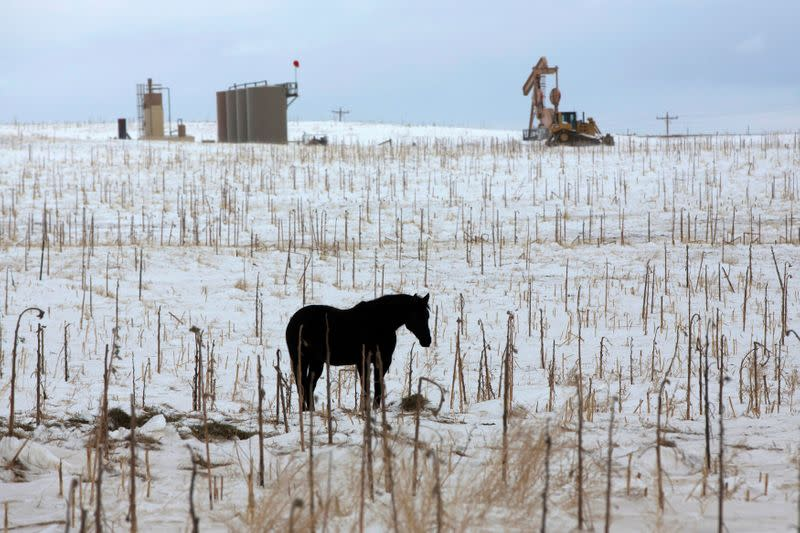 FILE PHOTO: A horse is seen in a field near an oil pump site outside of Williston
