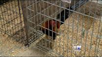 300 Birds Brought To Dallas After Raid