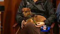 Pet Of The Week: Tamone and Roxxy