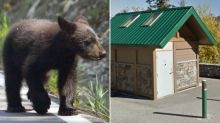 Bear cubs trapped in washroom mystify Banff park officials
