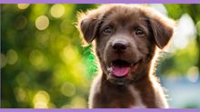 New puppy care: 3 important things all new puppies need to truly thrive