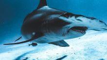 """""""El tiburón es demonizado todos los días y está sufriendo por esto, se lo está cazando sin control"""""""