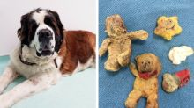 Dog feared to have cancer had actually eaten four teddy bears
