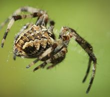 Science says there's a very, very good reason why you're afraid of spiders