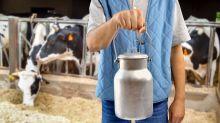Brucelosis: la enfermedad vinculada a la leche cruda despunta en EEUU