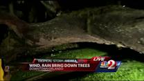 Wind, rain knock down tree in Orlando