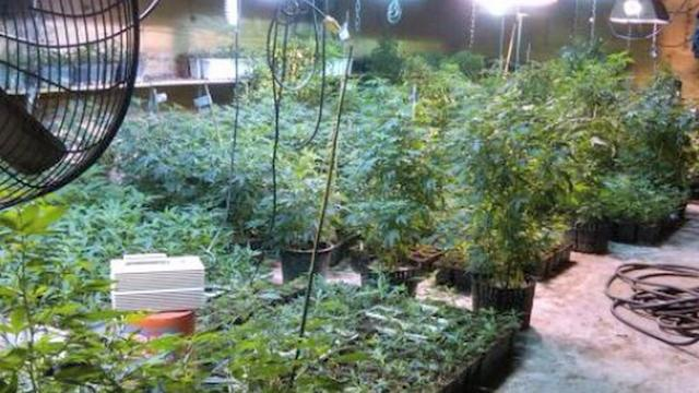 Suburban Mom Accused of Running Sophisticated Pot Business