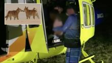 Little boy attacked by four dingoes on Fraser Island