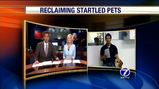 Owners reunited with stressed out dogs
