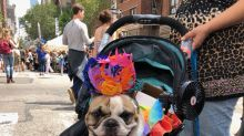 Confira os cãezinhos mais fofos celebrando o Orgulho LGBT nas paradas pelo mundo