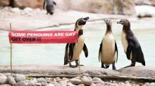 'Some penguins are gay, get over it' - Humboldt penguins at ZSL London Zoo join in Pride celebrations