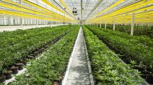 Marijuana stocks to watch: Aphria is positioning itself as a low-cost pot producer