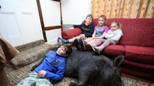 Family share home with giant pig found roaming their village