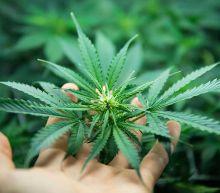 Aurora Cannabis Sales Fall More Than Expected; Marijuana Stock Tumbles