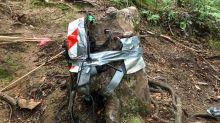Historia del tocón neozelandés que debería estar muerto, pero que vive
