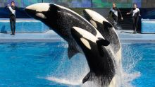London Eye Owner Sets Its Sights on SeaWorld