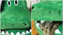 【有片】巨型版鱷魚小遊戲 喵星人出手超可愛