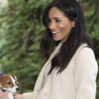Meghan Markle Releases New Message on Why Animal Adoption Will 'Undoubtedly Change Your Life'