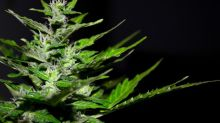 Tilray Acquires Natura Natural Holdings to Expand Its Capacity