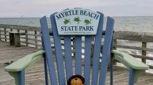 Good News des Tages: Vergessener Teddybär erlebt Abenteuer und kehrt dann zurück