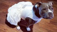 This bride bought a matching wedding dress for her dog: 'She is my family'