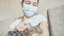 Covid, i gatti rischiano molto più di quanto si pensi: nuovo studio