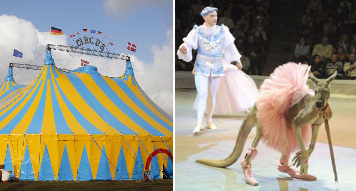 Circus slammed for dressing kangaroo up as ballerina