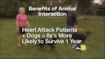 Caring Canines:Hospital dogs helping humans