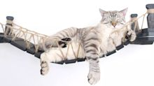 This clever napping bridge will serve as the perfect Christmas gift for your cat