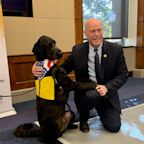 Therapy Dogs Visit Capitol Hill to Help Congress De-Stress as Impeachment Hearings Begin