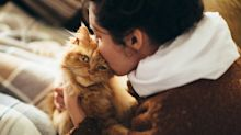 Cats Can Spread Covid. Here's What We Know.