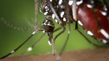Sommer-Prognose: Weniger Mücken, aber dafür die fiesen