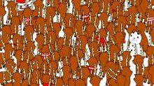 ¿Encuentras al oso oculto entre renos?