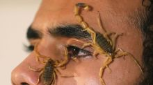 Young Egyptian finds fortune in scorpions