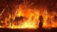 澳洲山火燃燒 5 個月,我們能置身事外嗎?
