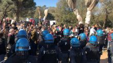 Italian police disrupt protest to prevent olive grove removal