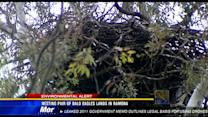 Nesting pair of bald eagles lands in Ramona