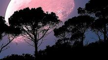 秋天要賞月,但你見過超迷幻的粉紅色月亮嗎?