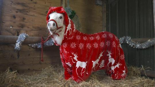 "<p>The ""foursie"" was commissioned by Ascot racecourse to promote its Christmas racing schedule — but it does actually serve a purpose of keeping this little guy snug. <i>(Photo: Ascot Racecourse)</i></p>"