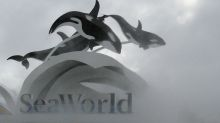 SeaWorld, ex-CEO settle SEC charges they hid 'Blackfish' impact