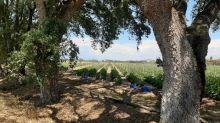 """""""Il y aura enfin des règles"""" : en Italie, les travailleurs agricoles clandestins pourront être régularisés"""