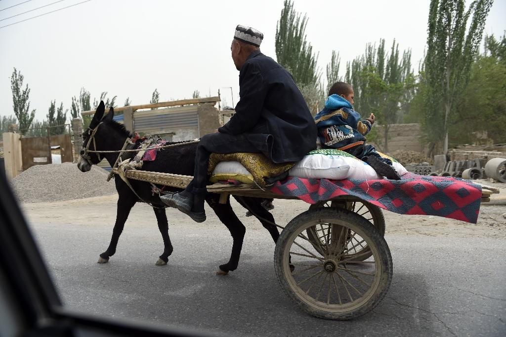 A man rides on a donkey cart in the town of Elishku, in Yarkand, China's western Xinjiang region, on April 18, 2015 (AFP Photo/Greg Baker)