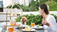 【同狗狗High Tea】酒店推人狗下午茶!狗狗食瑞典雪糕+狗曲奇