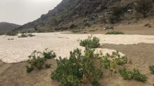 Floodwaters Sweep Through Saudi Desert as Heavy Rainfall Is Reported