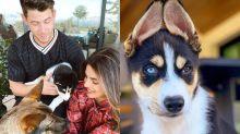 Priyanka Chopra, Nick Jonas Welcome New Member to Their Family