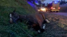 Man arrested over horse killings and mutilations in France