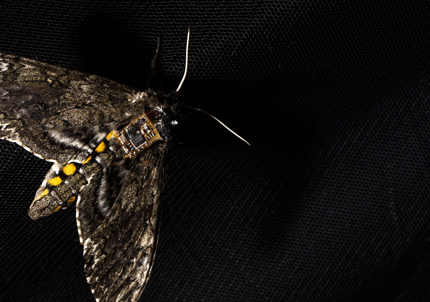 These tiny sensors can hitch a ride on mothback – Yahoo Finance Australia