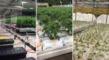 Inside CannTrust: Whistleblower reveals new video of alleged illegal grow room