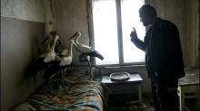 Bulgaren öffnen ihr Heim für in der Kälte gestrandete Störche