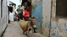 Kenya bans controversial donkey slaughter trade